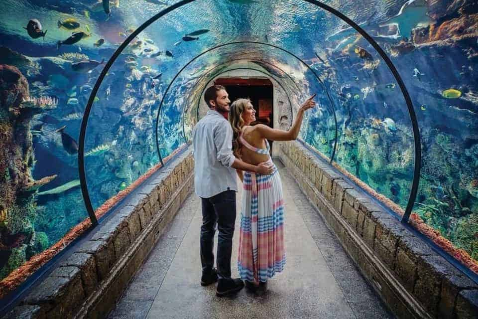 Hotels in Vegas with an Aquarium