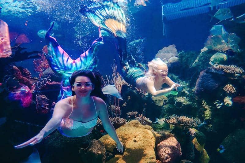 Mermaid Swim Free Show