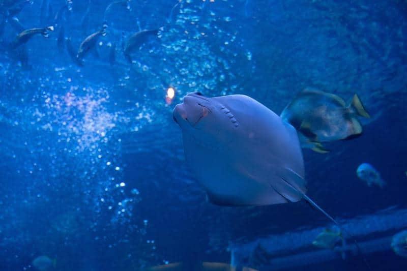 The Aquarium Silverton Casino Hotel