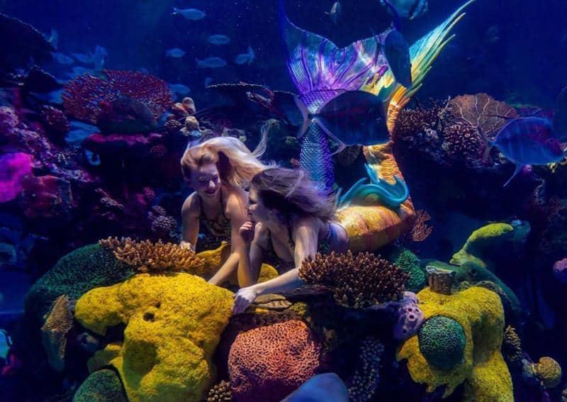 The Mermaid Lounge Live